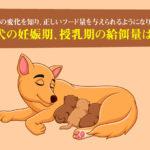 犬の妊娠期、授乳期の給餌量は?食事量の変化を知り、正しいフード量を与えられるようになりましょう!