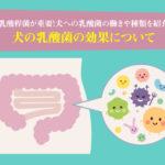 犬の乳酸菌の効果について。乳酸桿菌が重要!犬への乳酸菌の働きや種類を紹介
