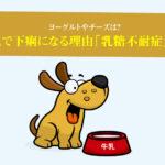 犬が牛乳で下痢になる理由「乳糖不耐症」について。ヨーグルトやチーズは?
