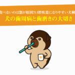 犬の歯周病と歯磨きの大切さ。ドッグフードを食べないのは顎が原因?