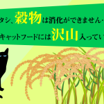 グレインフリーキャットフードを選ぶ理由。猫は穀物を消化できない