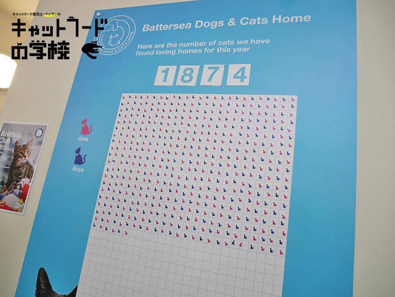 バタシー ドッグズ&キャッツ ホーム 猫舎