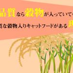 穀物入りの高品質キャットフードがある理由。高品質なら穀物入りでもいいの?