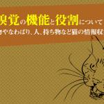 食べ物を判断する猫の嗅覚の機能と役割!嗅覚と鋤鼻器、フレーメン反応について
