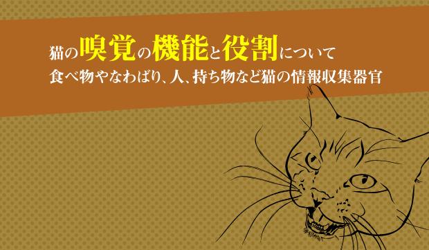 食べ物を判断する猫の嗅覚の機能...