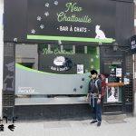 ベルギー初の猫カフェ「Le New Chattouille(旧Le Chat Touille)」を訪れました!