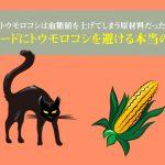 キャットフードにトウモロコシを避ける本当の理由は?