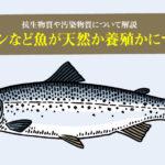 ペットフードに使われるサーモンなど魚が天然か養殖かについて。抗生物質や汚染物質について解説