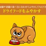 ドライフードをふやかす。カリカリは幼猫や老猫の食べ方に合わせてふやかして与えても大丈夫!